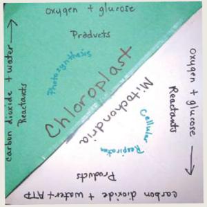 Photosynthesis Build Understanding